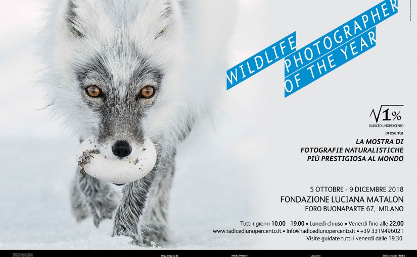 Wildlife Photographer of The Year 53 Torna a  Milano alla Fondazione Luciana Matalon
