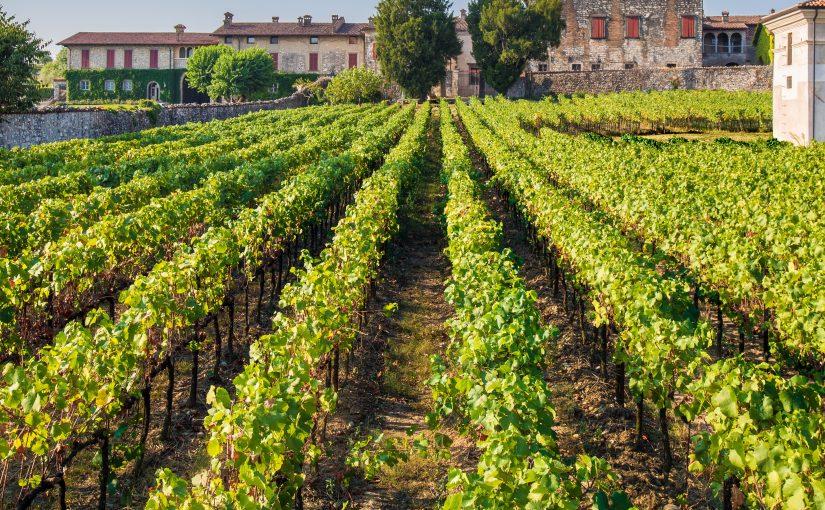 Guido Berlucchi torna protagonista della Milano Wine Week 2019