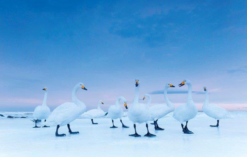 On Assignment, una vita selvaggia  Fotografie di Stefano Unterthiner Forte di Bard